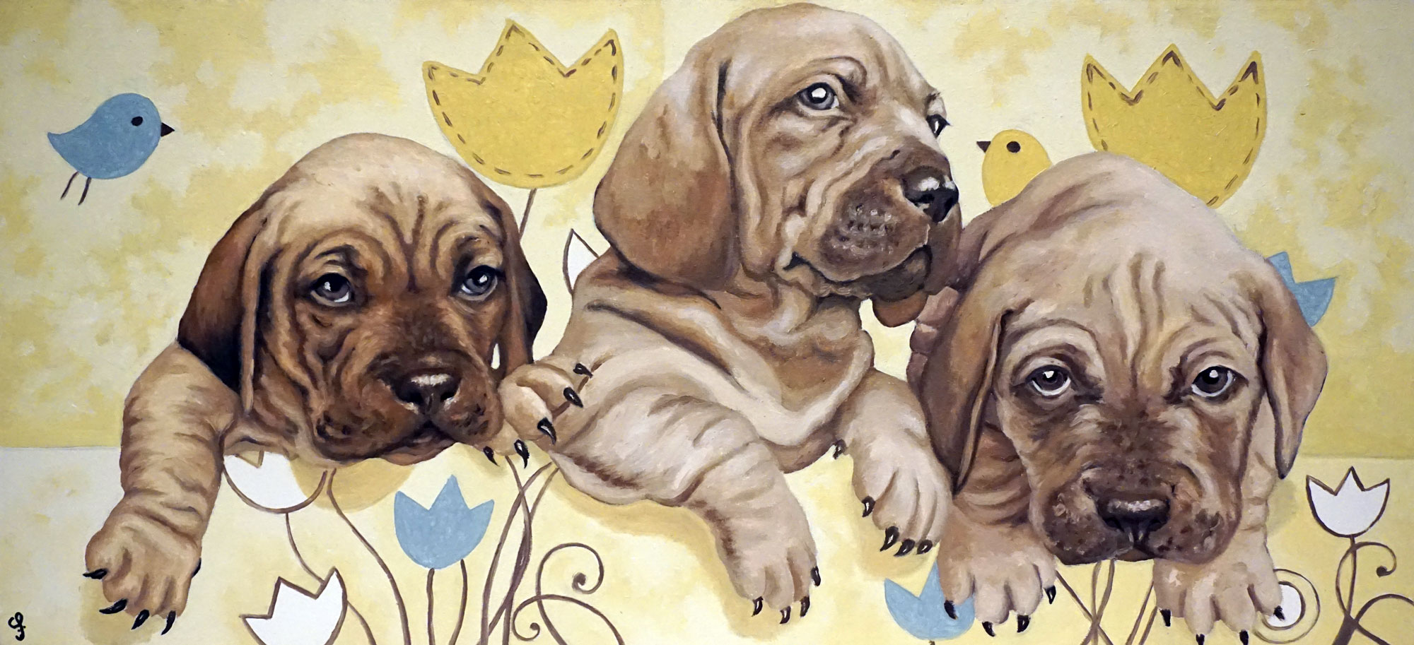Puppies portrait