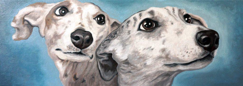 Ritratto cani, levrieri