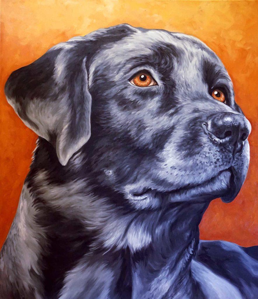 Ritratto Labrador nero, ritratto cane