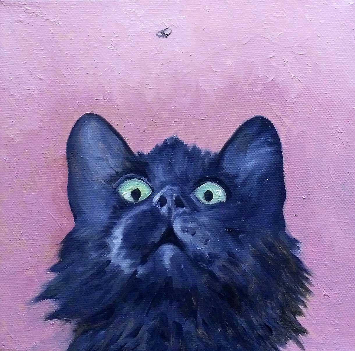 muso gatto mosca