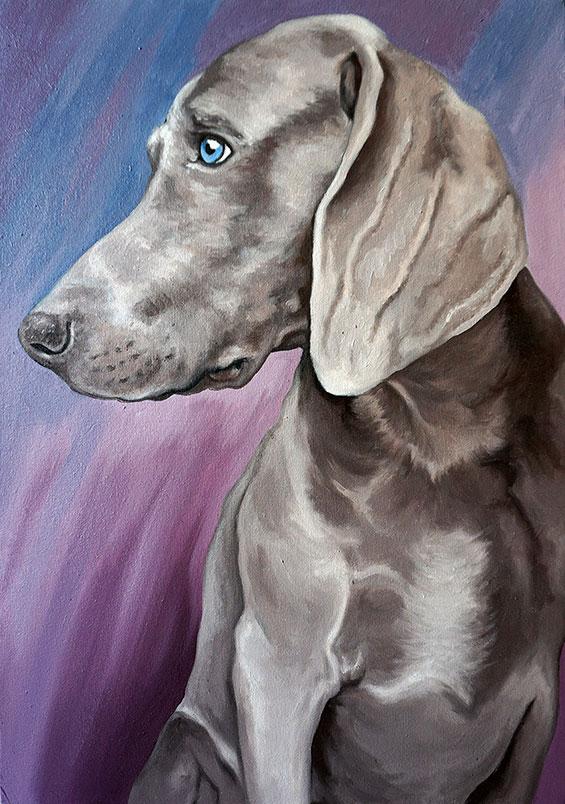 Ritratto Weimaraner, ritratto cane