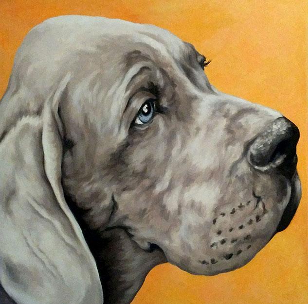 Ritratto Weimaraner, ritratto cane, olio su tela